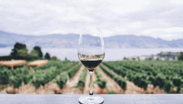 Wino i Oliwa - Szlak Win Empordà
